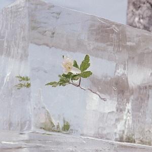 Foto von Windflowers