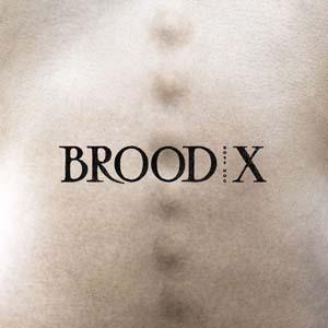 Foto von Brood X