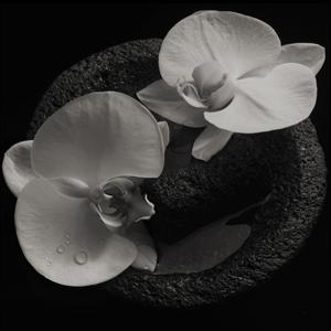 Foto von Corpse Flower (ltd. col. edition)