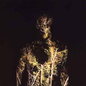 Foto von When Plants Turn Into Stones