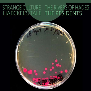 Foto von Strange Culture/Rivers Of Hades/Haeckel's Tale