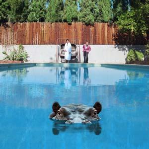 Foto von Hippopotamus